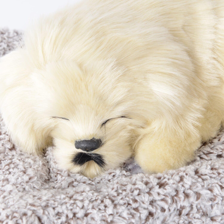 Maltese Puppy Pet Dog Sleeping On Mat Warm Soft Bed Pad Indoor Ebay